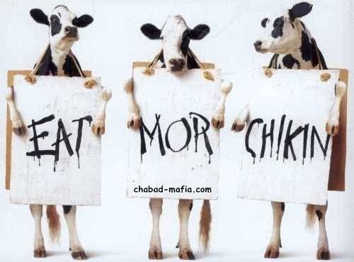 cows eat more chicken