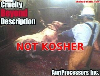 agriprocessors not kosher